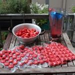 Nun kommt die Erdbeeren erst in den Mixer und dann in Eiswürfelbeutel, oder was auch immer ihr habt, um das Erdbeerpüree portionsweise einzufrieren.